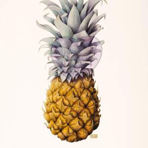 'Queen Pineapple' by Yvonne Hammond (also available as a greetings card and as a print)