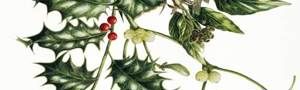 'Holly and Mistletoe' Christmas Cards